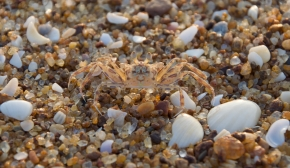 Wildlife in Ghana - Crab